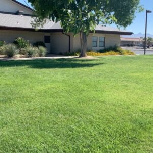 Example of well maintained lush green grass landscaping