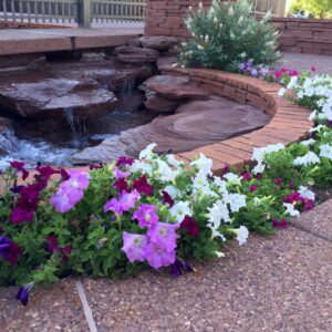 Attractive flowers in a garden with a landscaped pond